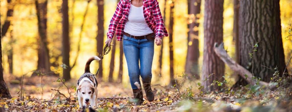 Vrouw die met hond aan het wandelen is