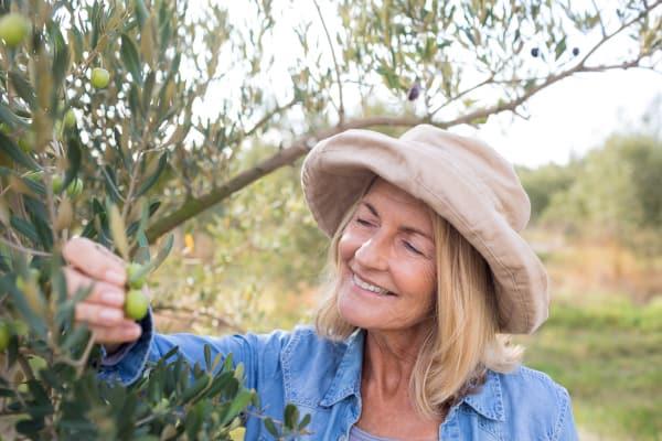 Olijven gezond: olijven zijn zeker gezond